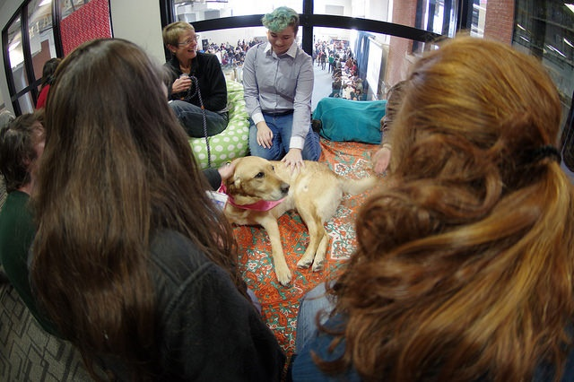 students sitting and petting a dog